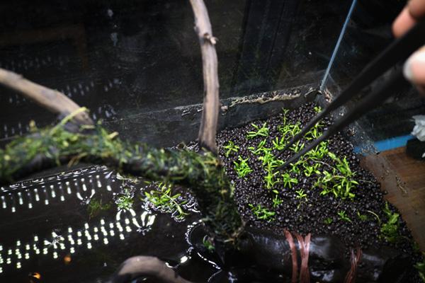 水草を植えてデザイン