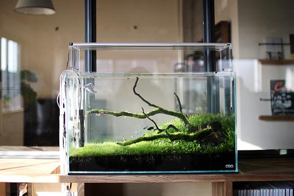 ネイチャーアクアリウム京都|オフィス|デザイン