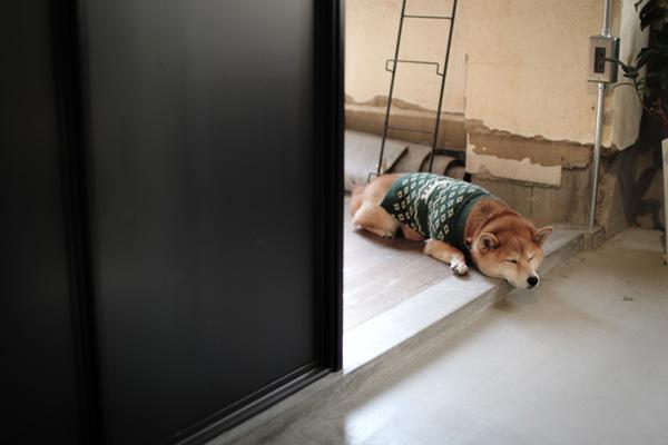 柴犬ゆかりちゃんちのフルリノベーション
