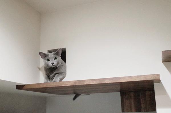 猫 キャットウォーク 京都