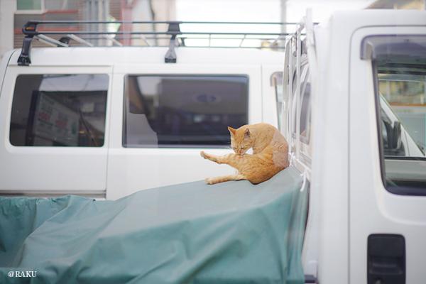 軽トラにのる猫|洛