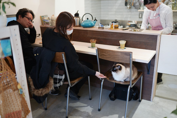 店舗デザイン リノベ 猫ちゃん